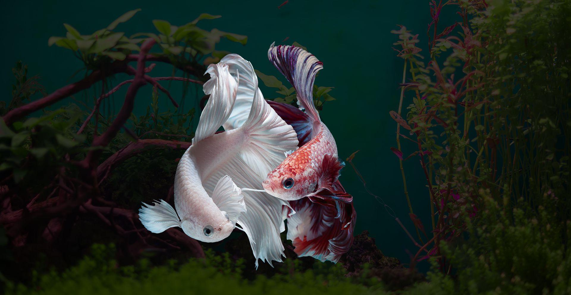 Sagar Fish Aquarium, Rohini, New Dehli