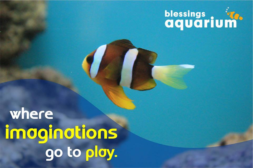 Blessings Aquarium Shoppe, Kalyani Nagar, Pune